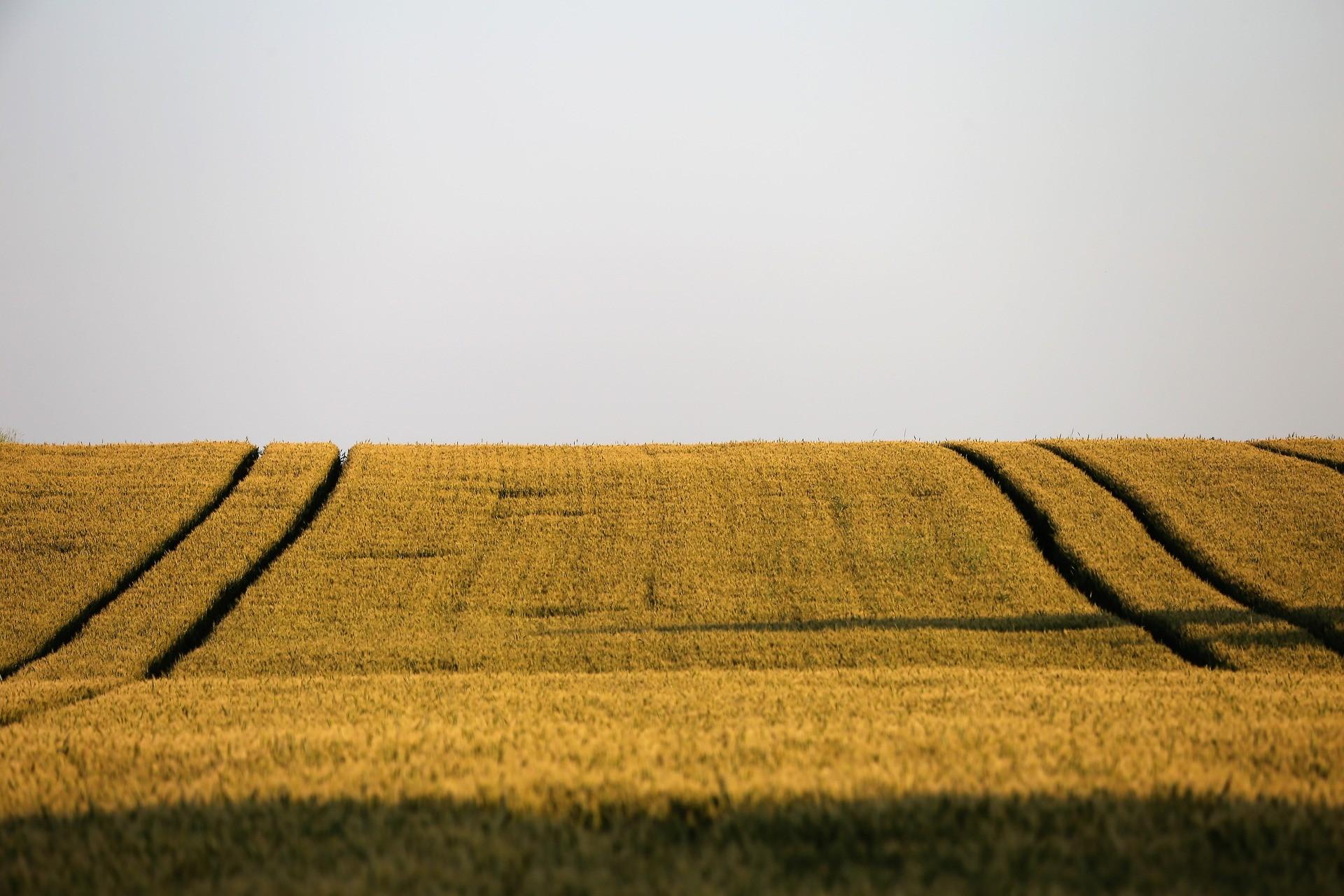 Agroalimentario 1
